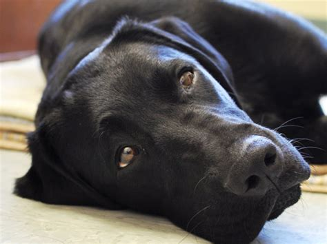 Stress and Your Dog - Dogs with Wings