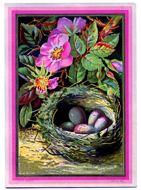 Vintage Clip Art - Nest with Eggs and Pink Roses - The