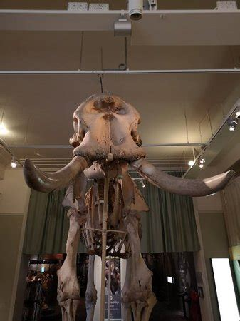 Swedish Museum of Natural History (Stockholm) - 2019 All