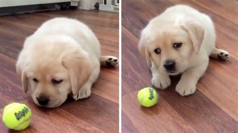 Could You Resist These Perfect Puppy Dog Eyes? [Video
