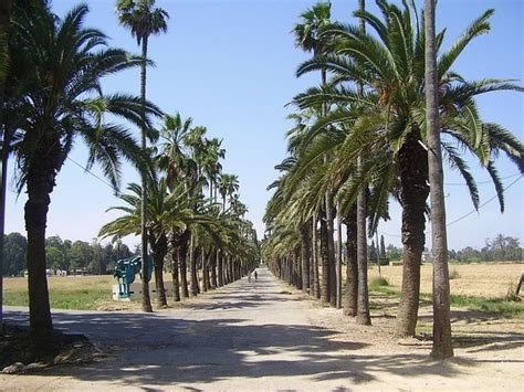 Do palm trees grow in Israel? - Quora