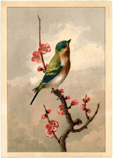 Free Bird Picture with Blossoms - The Graphics Fairy